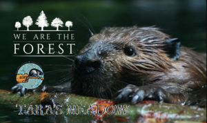 How Beavers Can Save The World @ Tara's Meadow | Beaver Island | Michigan | United States