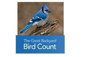 Great Backyard Bird Count @ Your Back Yard